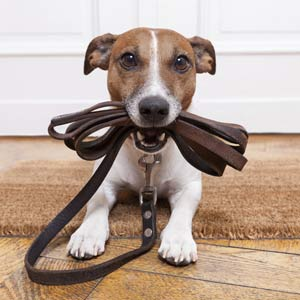 Puppy Training in Lingfield Surrey