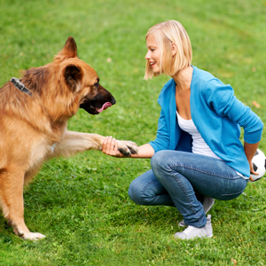 Dog training in East Ggrinstead and Lingfield Surrey